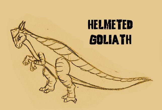 12-helmeted-goliath