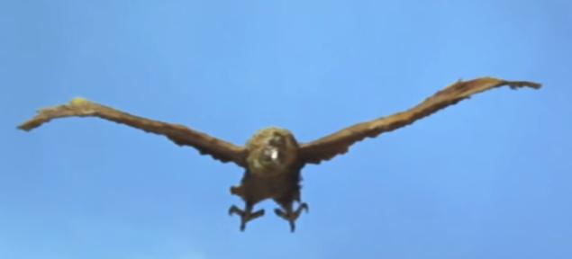 Giant Condor a